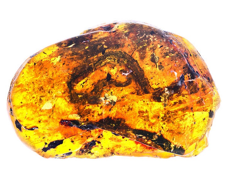 Fiatal kígyó maradványait fedezték fel 99 millió éves borostyánkőbe zárva