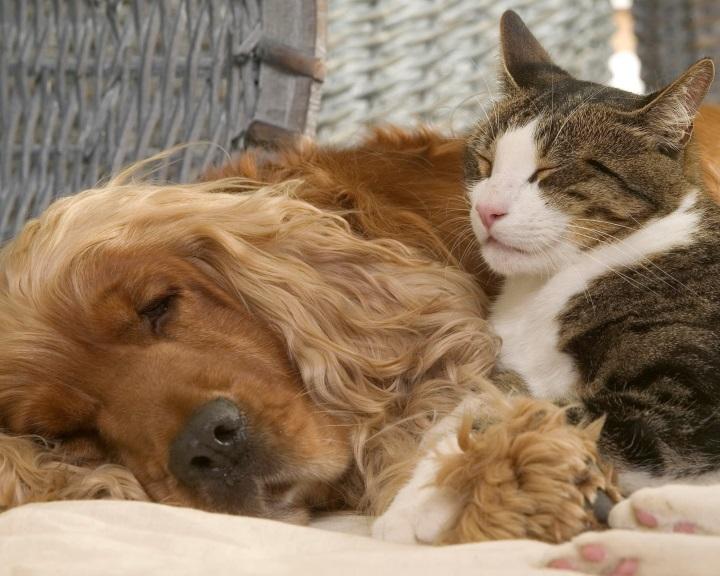 A kutyák és a macskák általában harmóniában élnek egymással