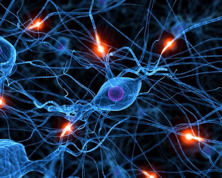 Újfajta neuront találtak az emberi agyban