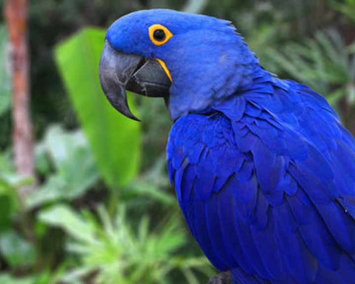 Nyolc madárfaj halt ki az elmúlt években a BirdLife International szerint