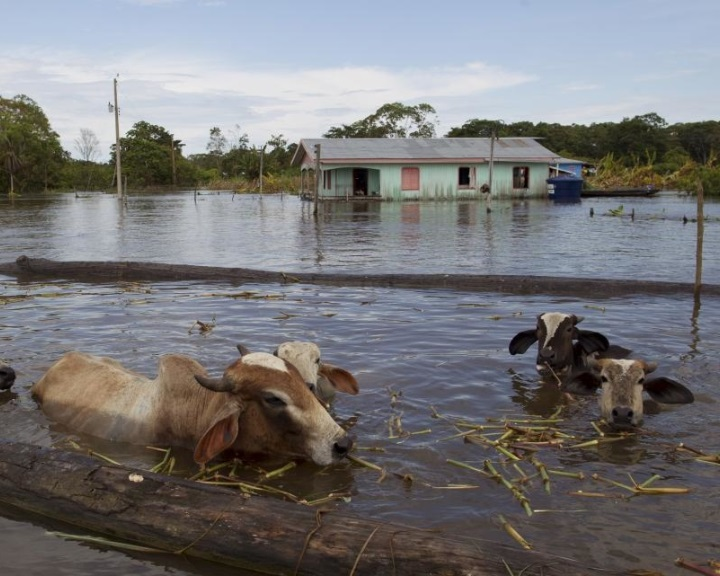 Egyre gyakoribbak a rendkívül súlyos áradások az Amazonason