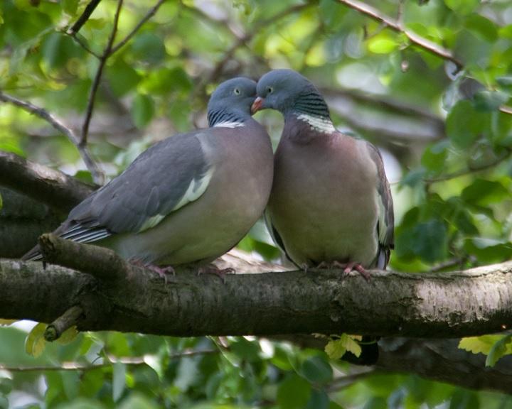 Mintegy 5,2 millió vonuló madarat számoltak meg az Európai Madármegfigyelő Napok résztvevői