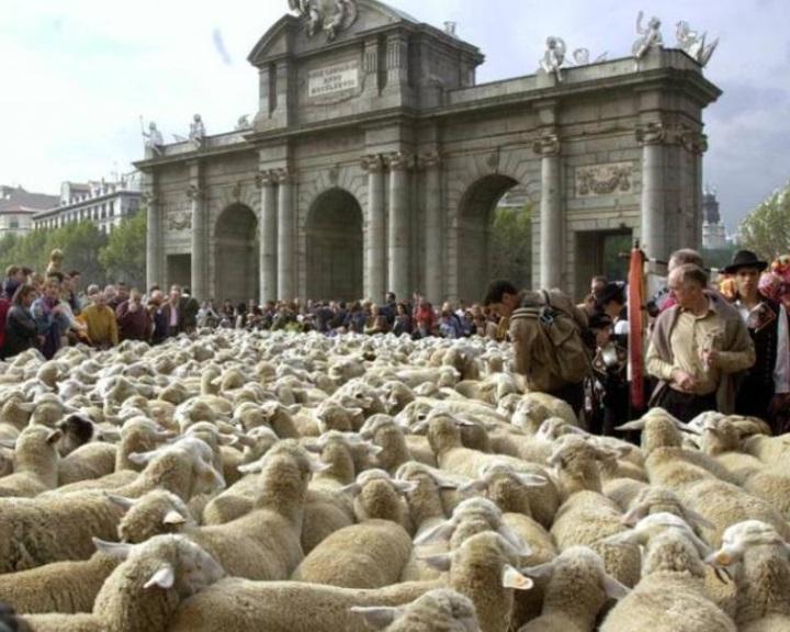 Birkafelvonulást rendeztek a vándorlegeltetésért Madridban