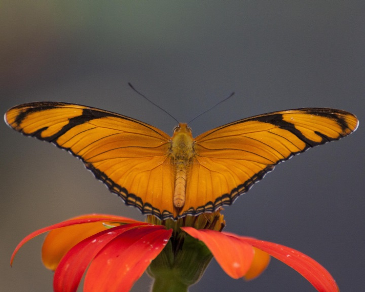 Rohamosan csökken a rovarállomány
