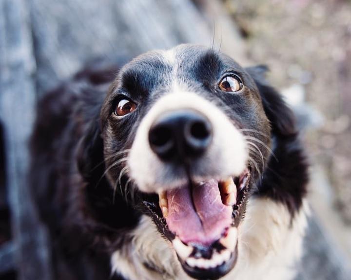 Szakértő: a kutya viselkedéséért a gazdája felel