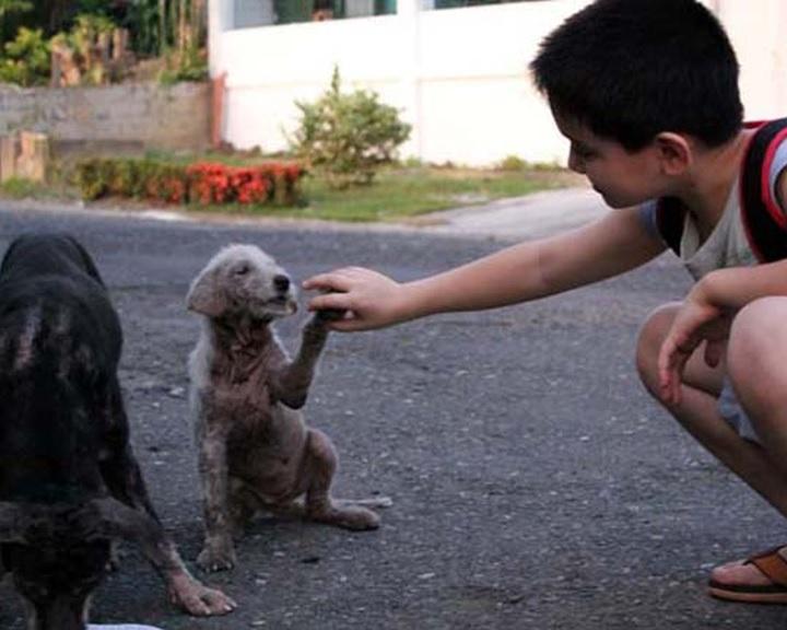 Adománygyűjtés az árva állatoknak