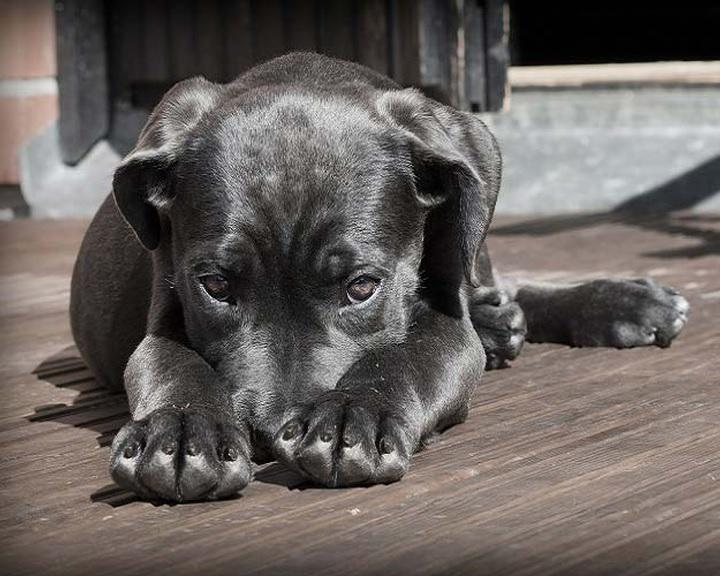 A kutyák is tisztában vannak azzal, ha nem tudnak valamit
