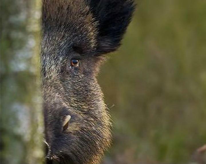 Erdőlátogatási korlátozások a téli társas vadászatok idején