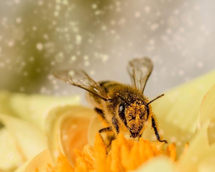 Nagy István: a méhészetnek fontos szerepe van a vidékfejlesztésben