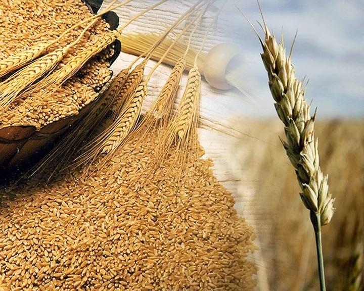 FAO: több mint kétéves mélyponton a világpiaci élelmiszerárak novemberben