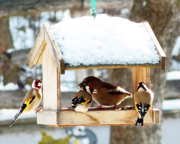 Állatvédők: életmentő lehet az áttelelő madarak etetése