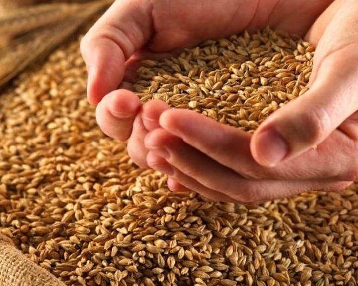 Meghosszabbítják a gabonafélékre vonatkozó fordított adózást