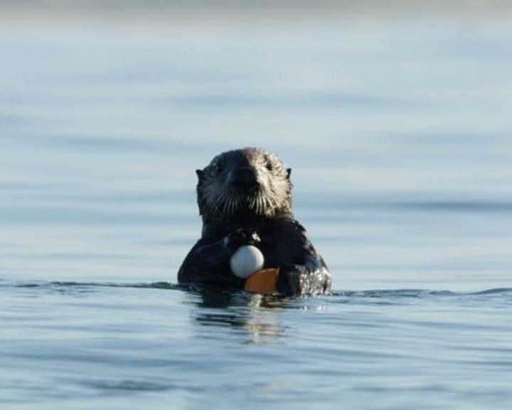 2,5 tonna golflabdát távolítottak el a kaliforniai Monterey-öböl vízéből