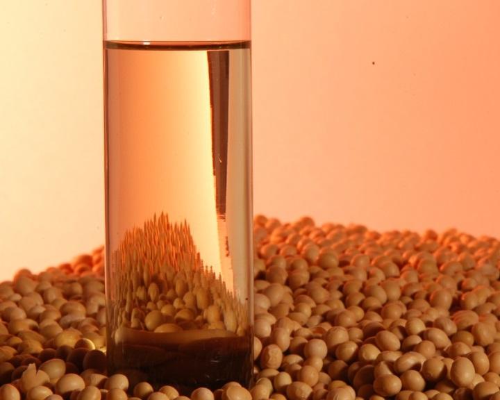 Engedélyezték az amerikai szójabab bioüzemanyagként való felhasználását