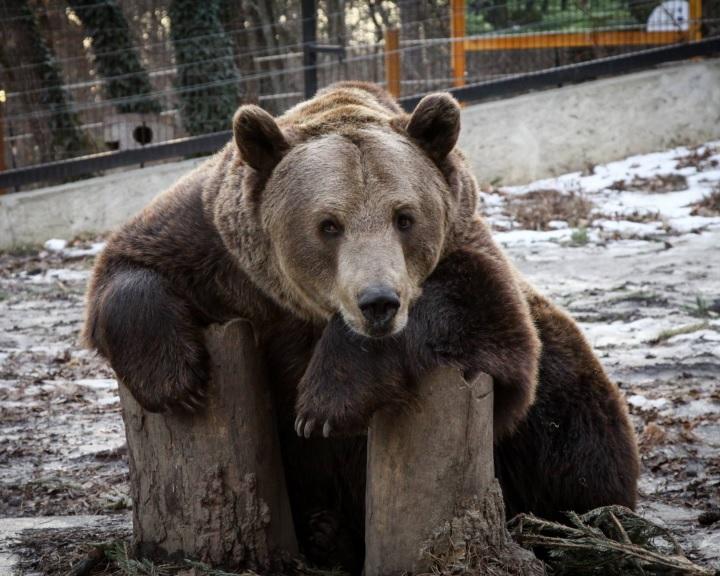 Az ország több intézményében szerveznek a hétvégén időjósló medvelest