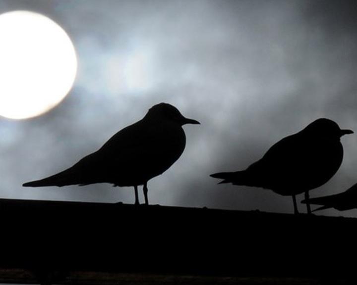 Eltűntek a madarak Európából