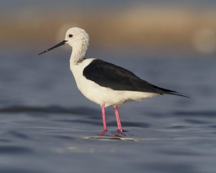 Rajzpályázat – 2019 év madara a gólyatöcs