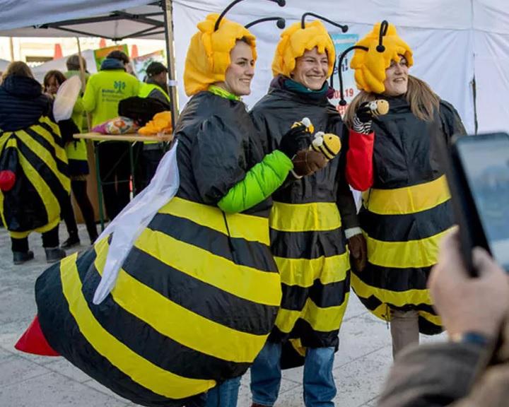 Alírásokat gyűjtöttek Bajorországban a rovarpusztulás feltartóztatásáért