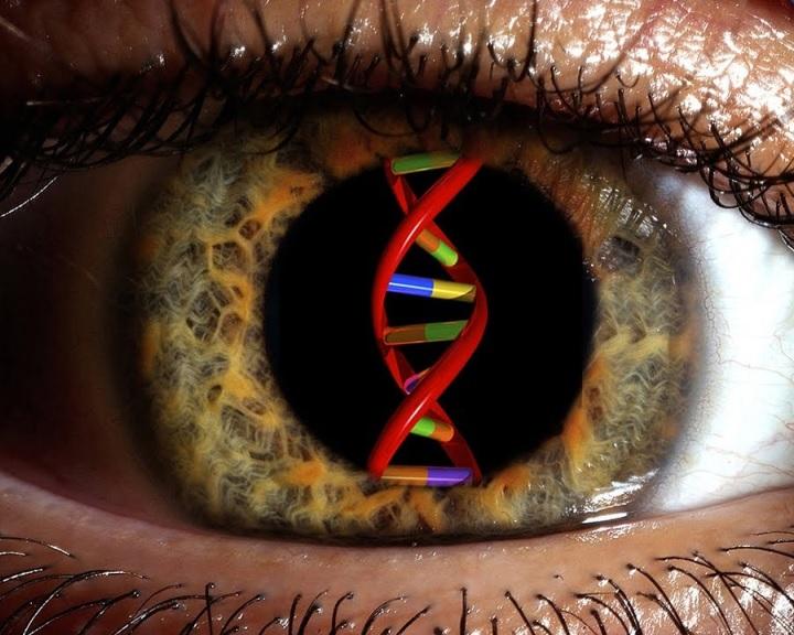 Először kezeltek génterápiával makuladegenerációt