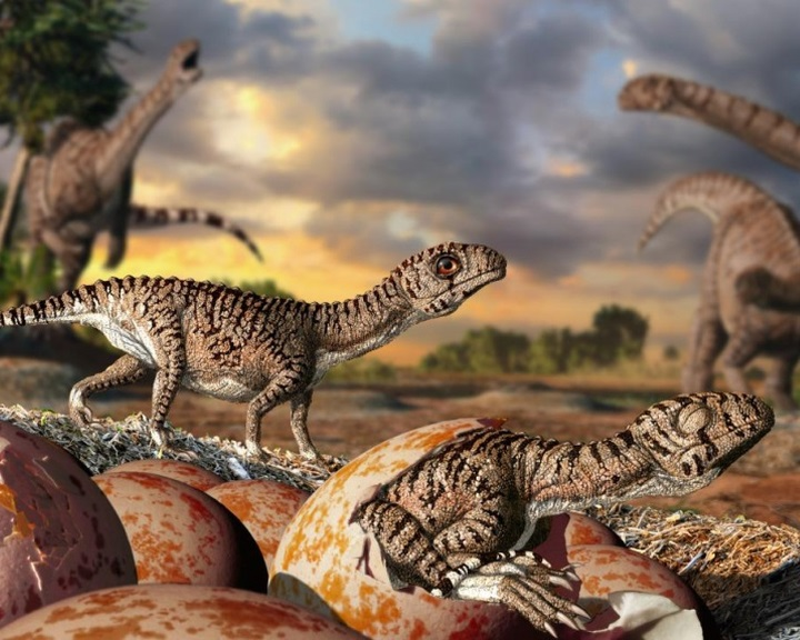 A kemény héjú tojás 200 millió éves evolúciós találmány