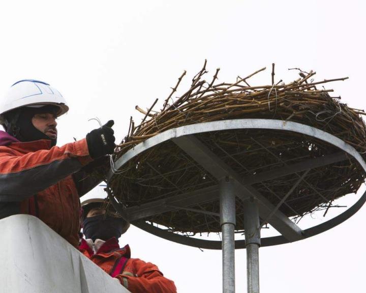 Több mint négyezer fészektartóval várja az E.ON a gólyákat