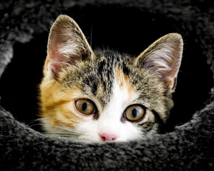 A macskák felismerik a saját nevüket