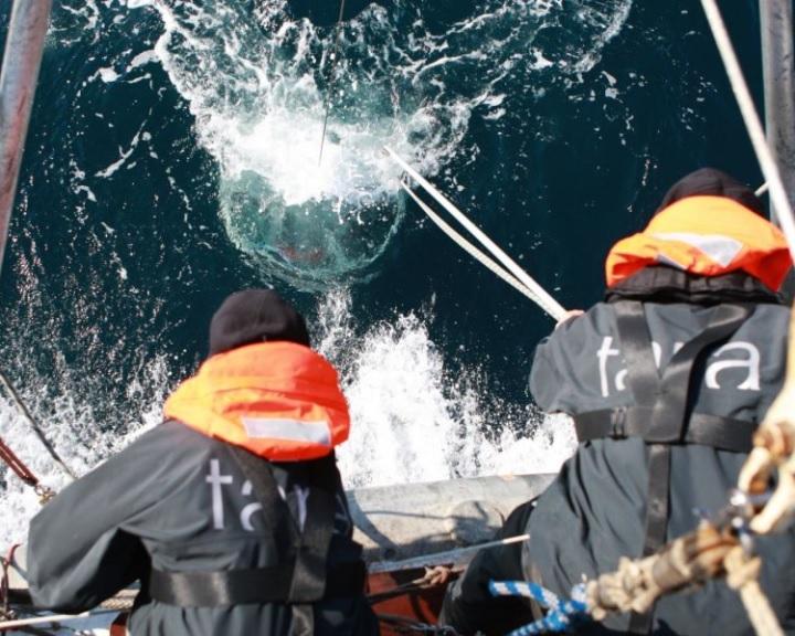 Csaknem 200 ezer tengeri vírust azonosítottak