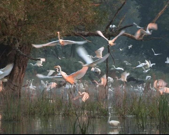 Május végén rendezik meg a természet- és környezetvédelmi filmnapokat
