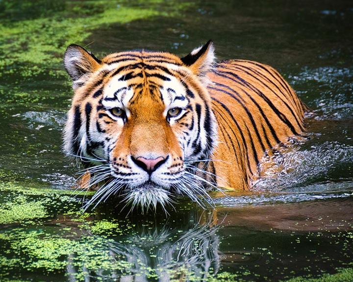 Egymillió fajt fenyeget a kihalás