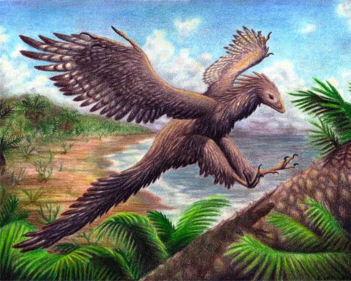 Jura időszakban élt ősmadár fosszíliájára bukkantak Németországban