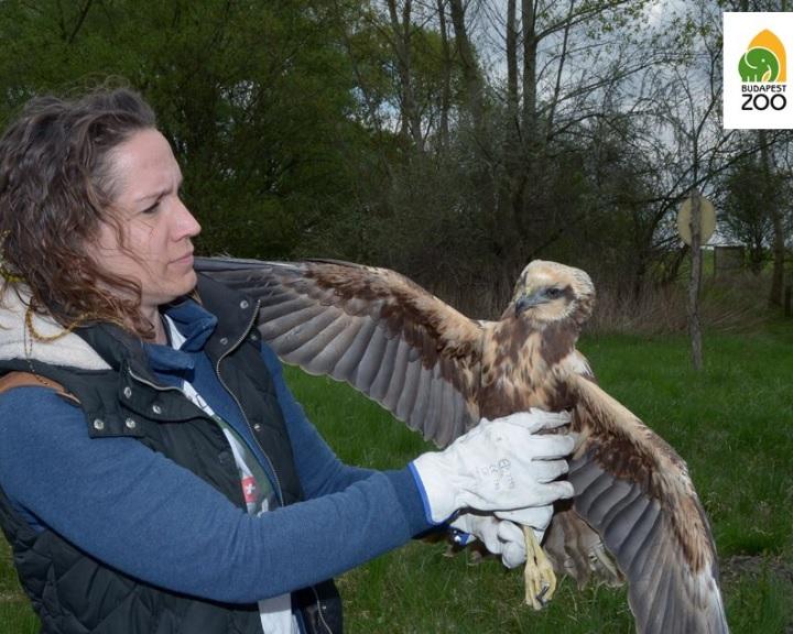 Nemzetközi vadállatmentő konferenciát rendeznek az Állatkertben