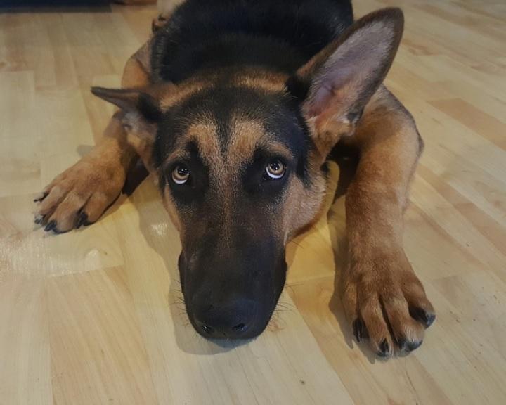 A kutyák tükrözik gazdájuk stresszes állapotát
