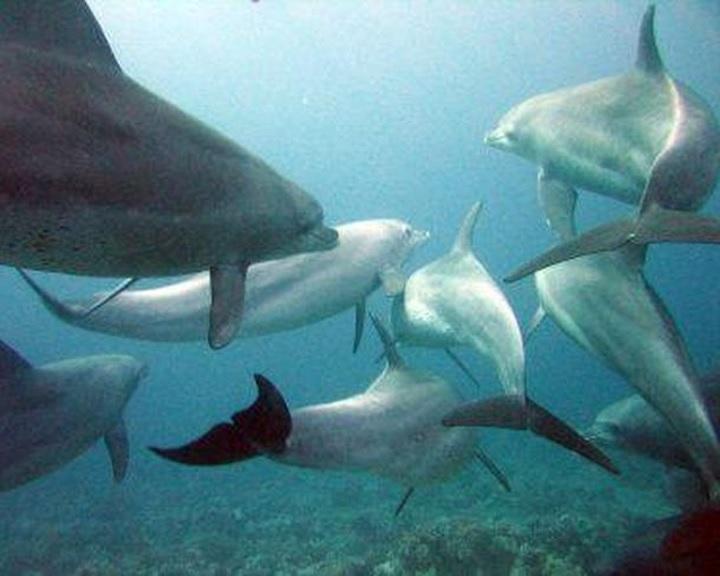 Cousteau a cetbörtönben tartott fehér és kardszárnyú delfinek elengedését kérte Putyintól