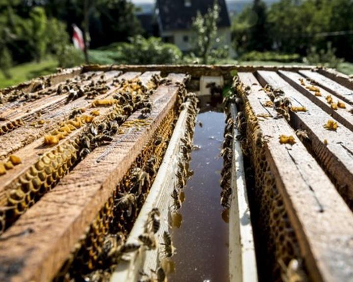AM: jövedelempótló támogatást igényelhetnek a méhészek