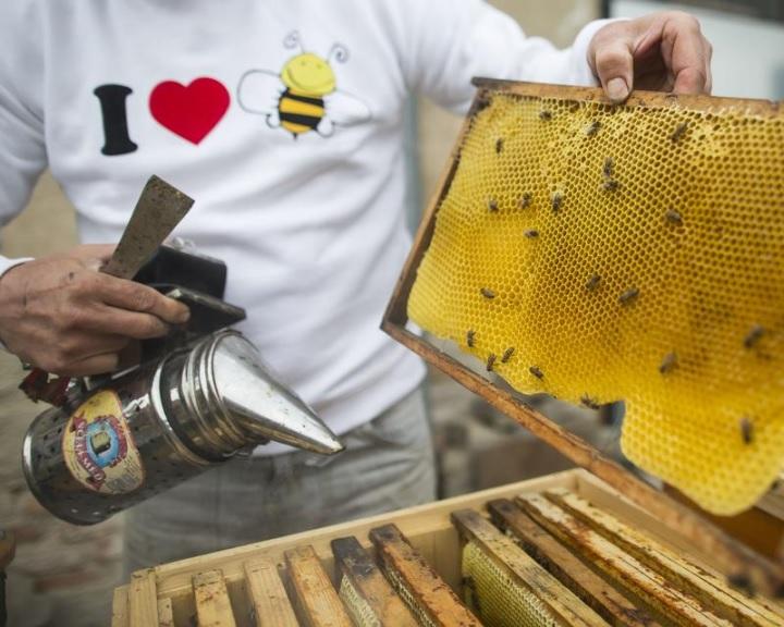 Az agrártárca a méhpusztulási esetek jelentését várja a méhészektől