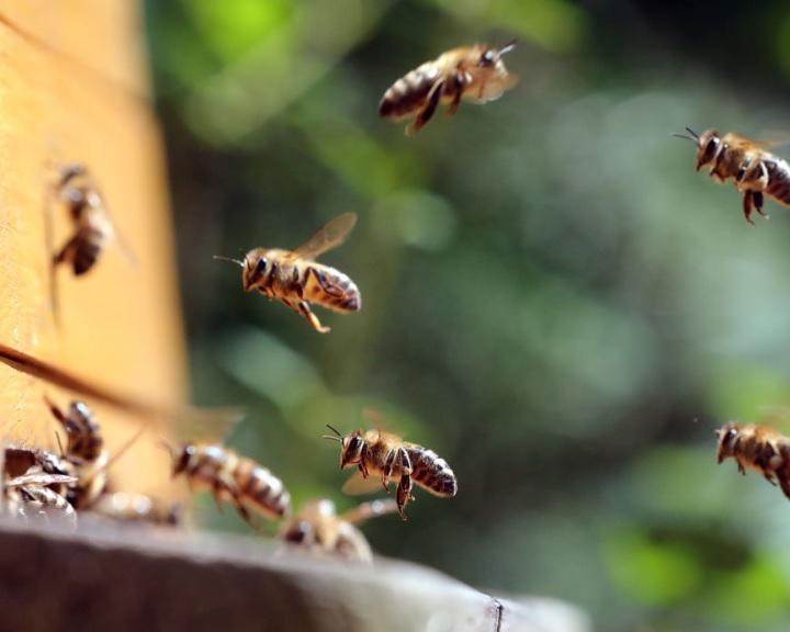 Méhészeti Egyesület: a hőség sem kedvez a méhészetnek