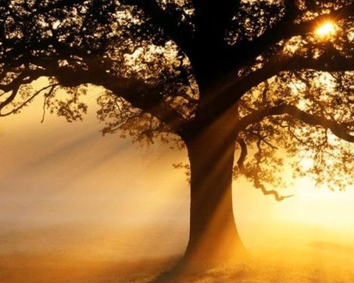 Az erdőtelepítés a leghatékonyabb megoldás a globális felmelegedésre