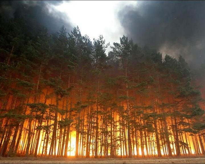 Egy évszázadra lesz szükség a leégett szibériai erdők regenerálódásához