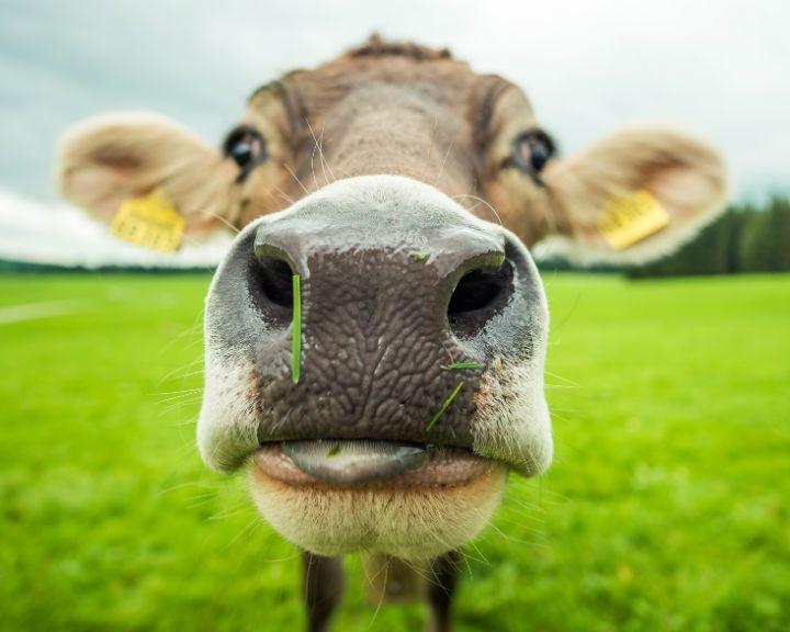A hús árának emelését sürgetik német állatvédők