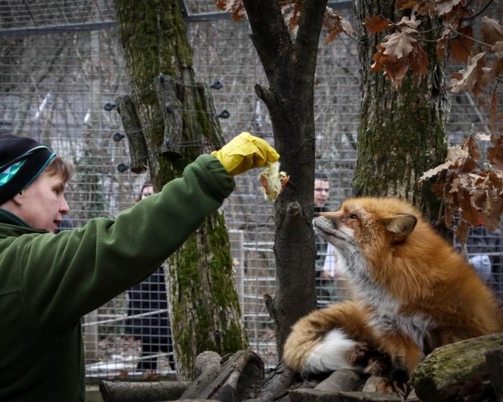 Állatkertek éjszakája - Pécsen két estén át is várják a látogatókat