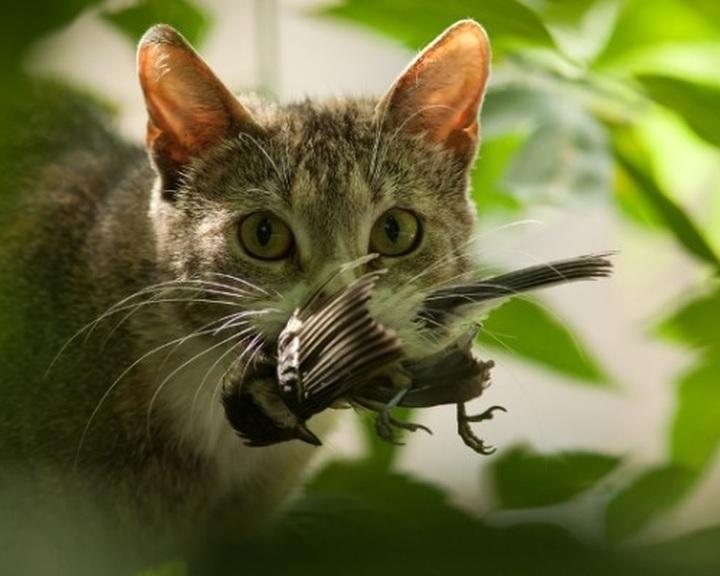 Madarak és macskák a kertben