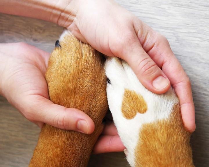 Közösségi adománygyűjtő program indul a kutyamenhelyek támogatására