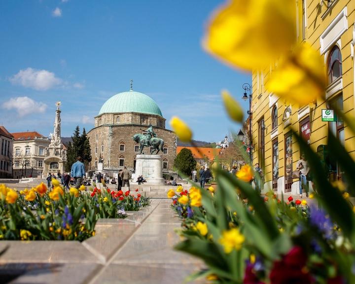 Ismét pályázik a pécsi önkormányzat az Európa zöld fővárosa címre