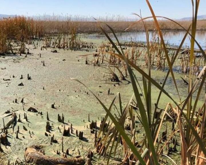 Világszerte súlyosbodik az édesvízi tavakat érintő nyári algavirágzás