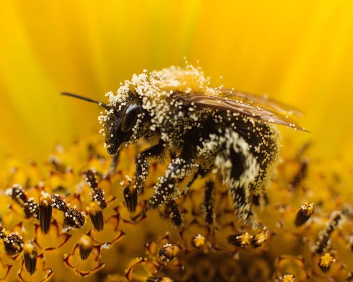 Az EP a méhek védelmére újabb javaslatot kér az Európai Bizottságtól