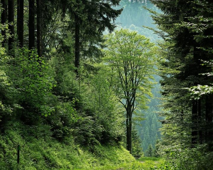Vasszigor jöhet a hazai erdőkben