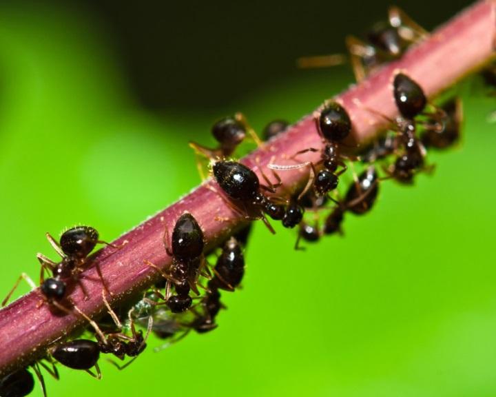 Sokat tanulhatunk a hangyáktól a közlekedési dugókról