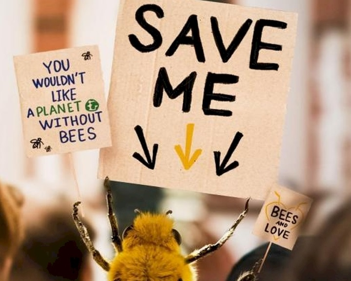 Internetes kedvenc lett a méhek megmentéséért kampányoló méhecske