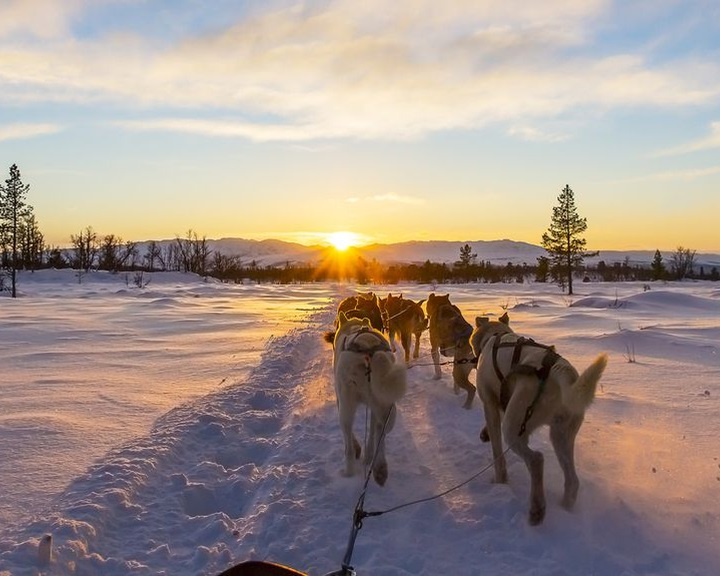 Különleges szánhúzó kutyák segítettek az inuit hódítóknak
