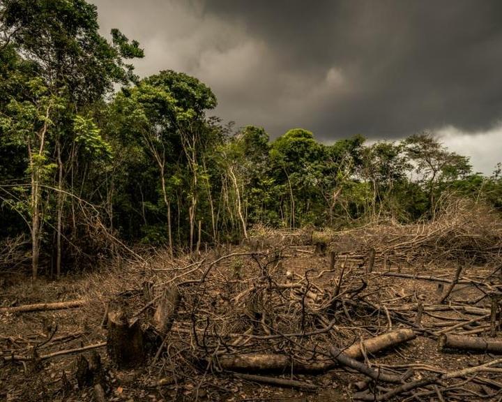 Az uniós tagországok összefogást sürgetnek az erdőirtás megállítása érdekében